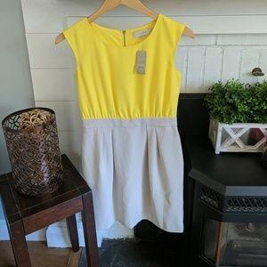 NWT dress from Loft